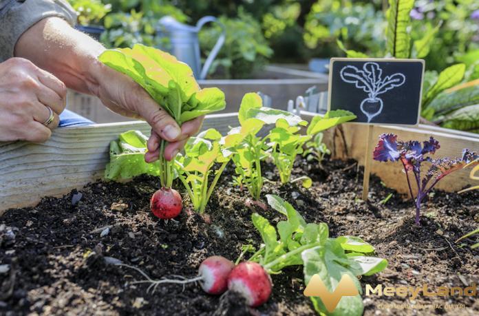 Kinh nghiệm trồng rau trên sân thượng đến từ các chuyên gia