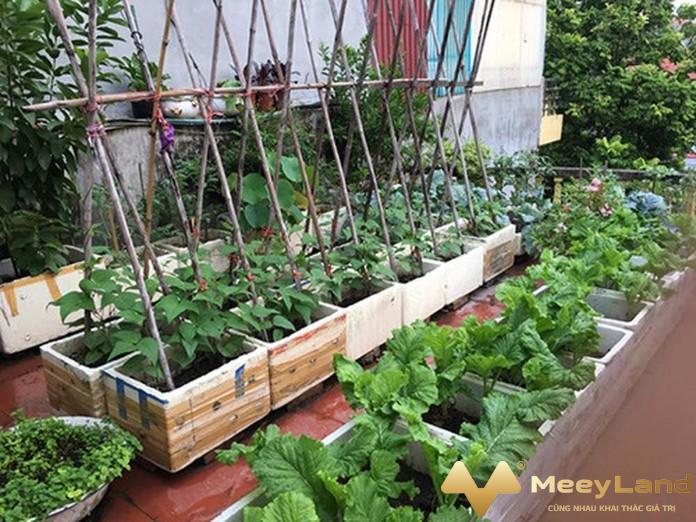 3 anh 3 dat trong nen tuoi xop va nhieu dinh duong nguon internet - Kinh nghiệm trồng rau hữu cơ trên sân thượng chi tiết nhất - giai-phap-xay-dung