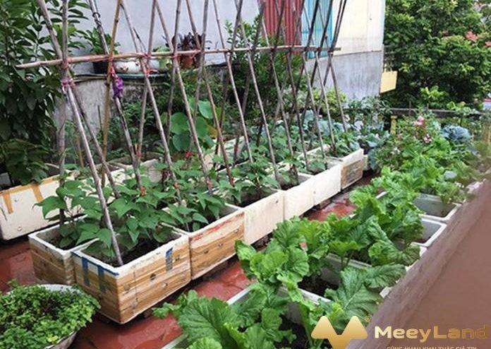 Kinh nghiệm trồng rau hữu cơ trên sân thượng chi tiết nhất